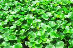浮水植物种植步骤