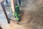 混凝土装饰地板