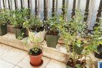 朝南种植喜光盆栽